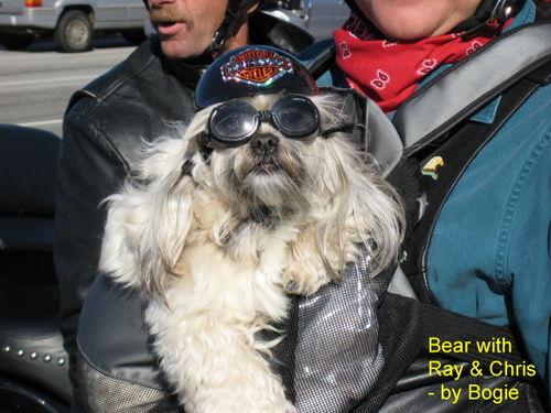 Bear-sm