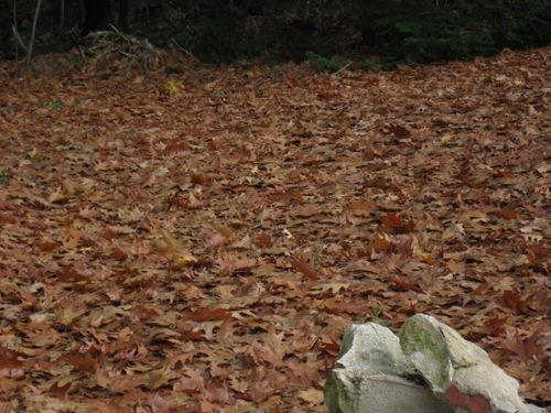 Leaves 11-9-sm