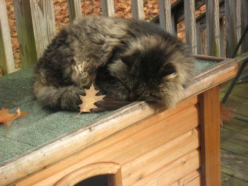 Fuzzy leaf 11-9-sm