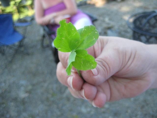 4-leaf clver