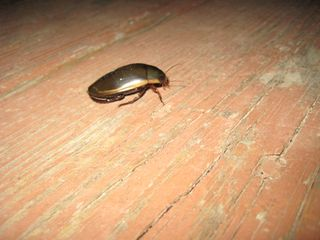 Big Bug1