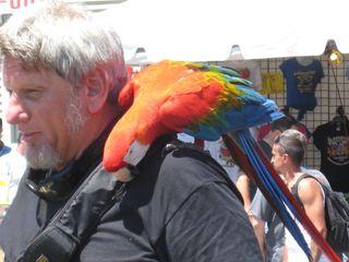 Bird guy parrot