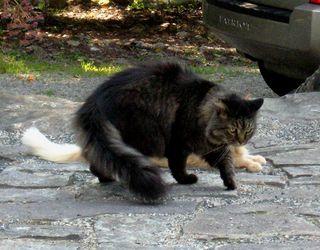 Fuzzy-Sammy