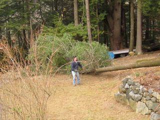 Tree-jimmiestump