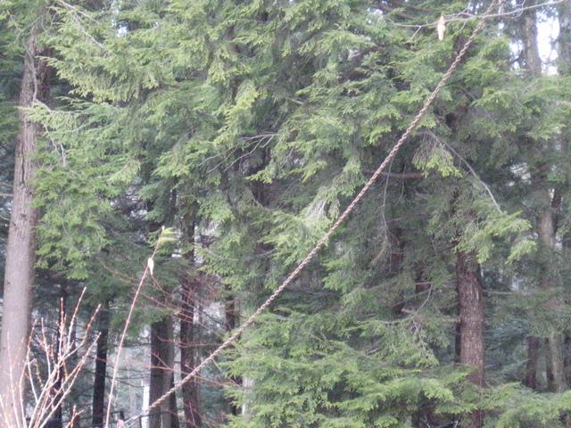 Tree-chain