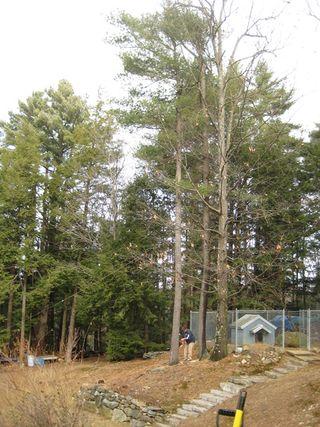 Tree-jimmie start