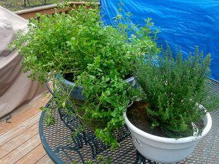 Saved Herbs (800x600)