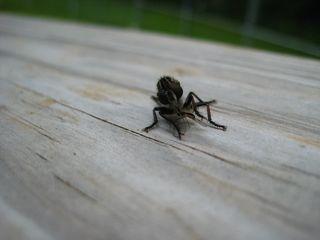 Bug Eat Bug