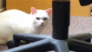 Spirit (Rita) at Animal rescue league shelter
