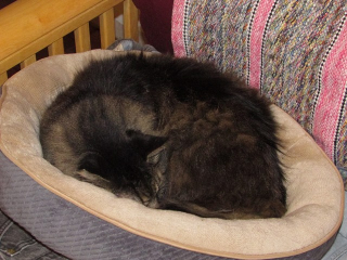 Fuzzy in cat bed