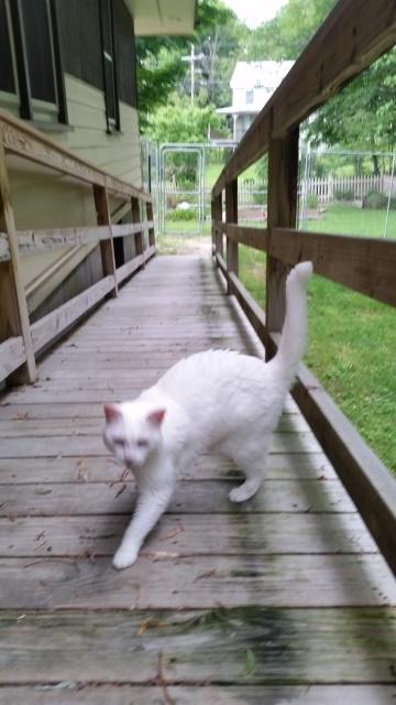 Rita on porch walking-trnd