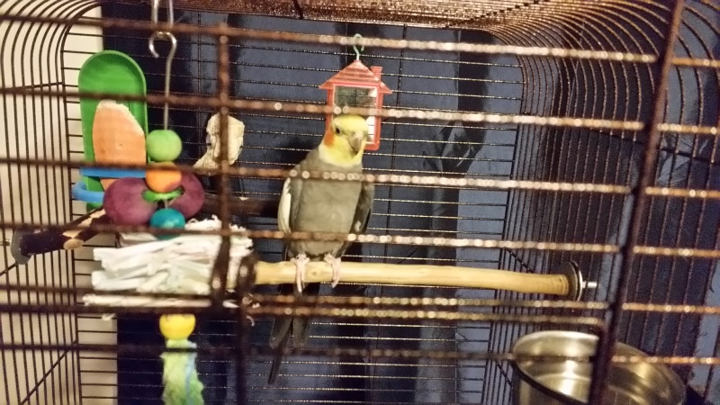 Ziva new cage close