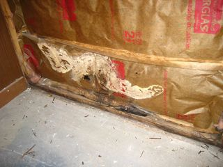 Gym Foundation Wall Insulation Mold paper