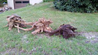 Stump 4 hole