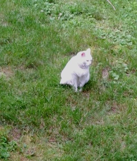Rita in grass-trnd