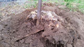 Stump 2 top