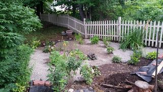 Camera gravel plants 1