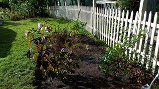 Shrubs planted 1