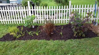 Shrubs mulched 2
