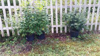 Plants left in pots