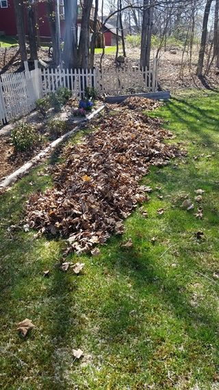 Leaves raked