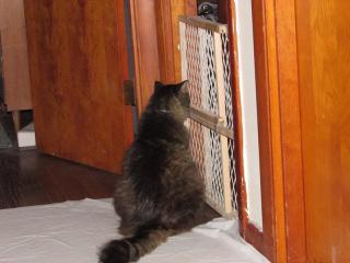 Fuzzy at Ritas door 2