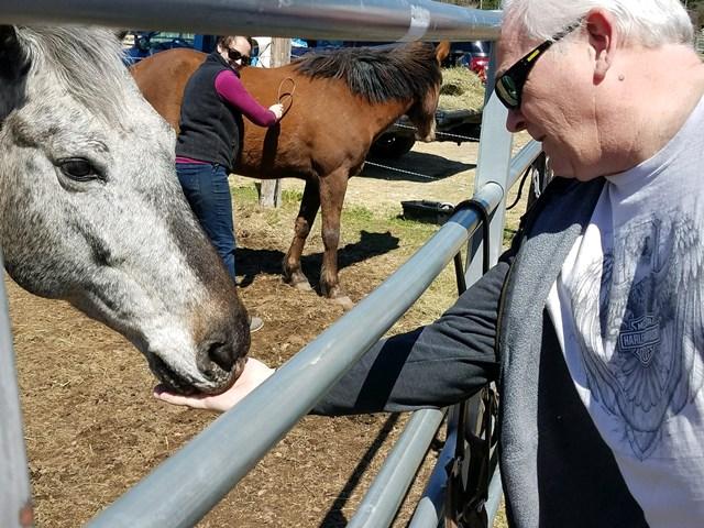 Horse feeding-keith
