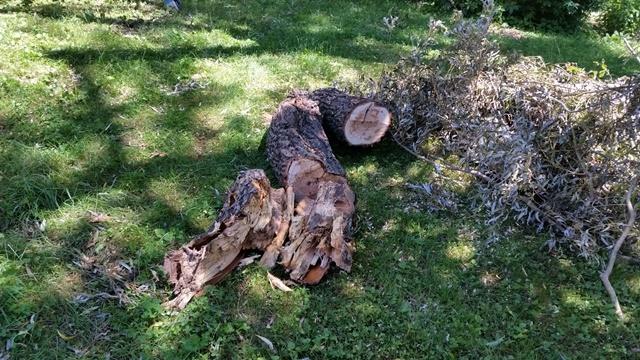 Wood cut 2