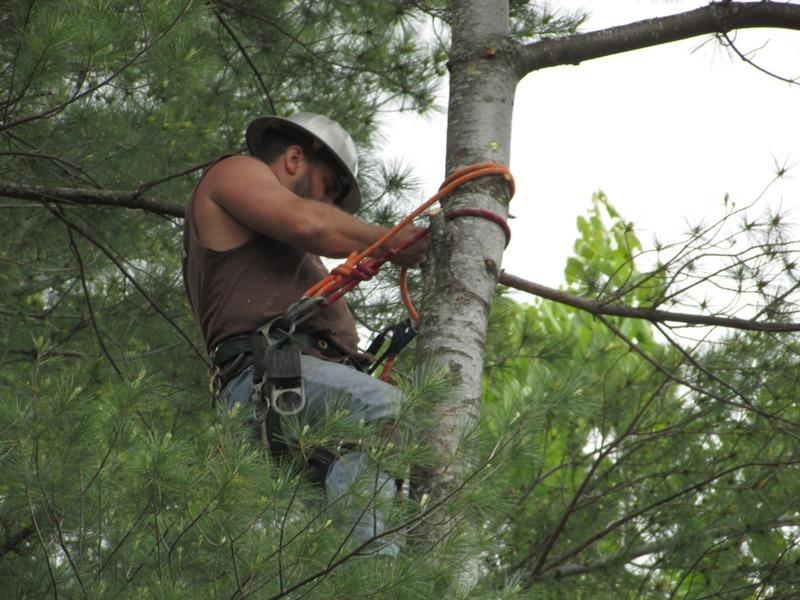 Scotty tree - 4-close