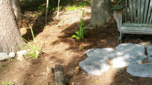 Start of sitting area in woods