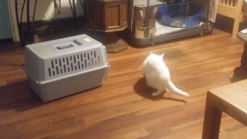 Rita turn away kittens carrier