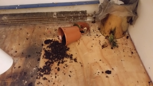 Destroyed plant in bathroom