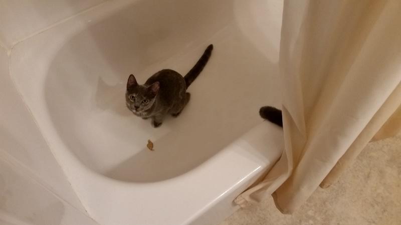 Spot in bath tub