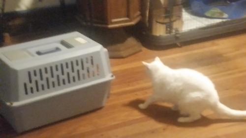 Cat carrier kittens truck in yard