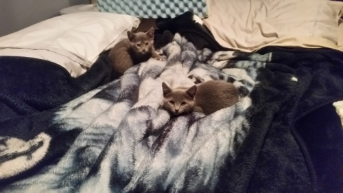Kittens on bed