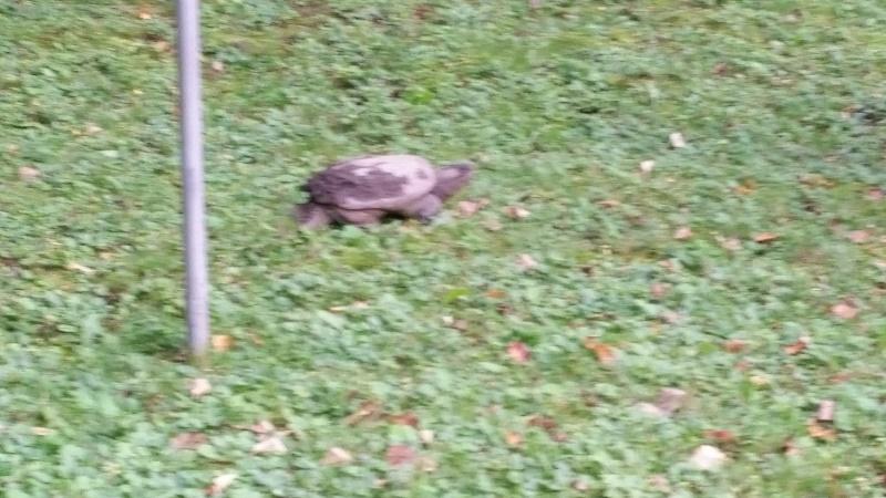 Turtle past clothes line