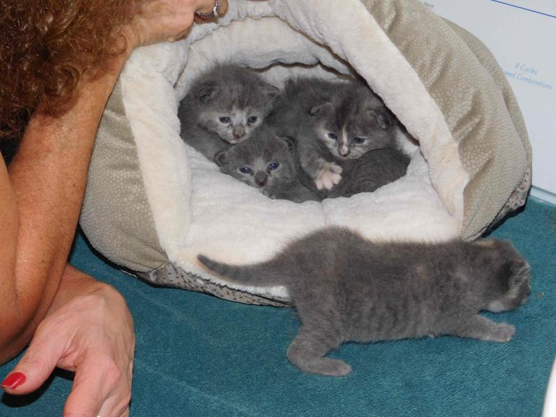 Kittens socializing-couple of weeks