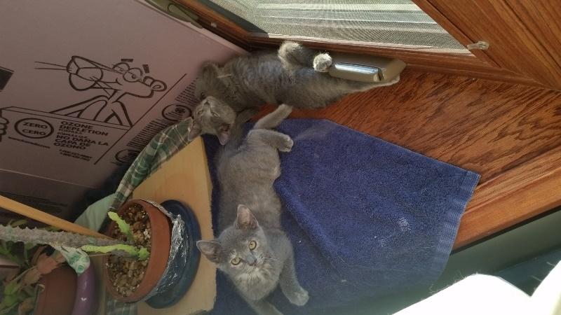 Kittens in bay window