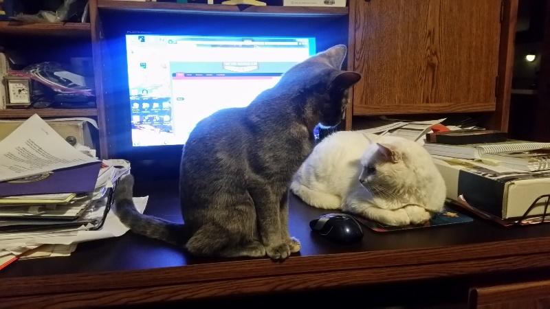 Rita and Spot on desk