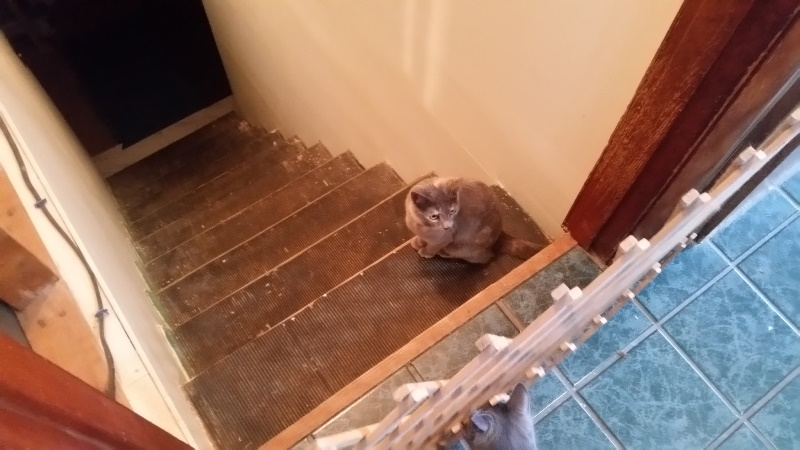 Spot on stairs