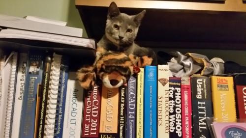 Spot on tiger 1
