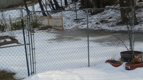 Backyard stream by gate