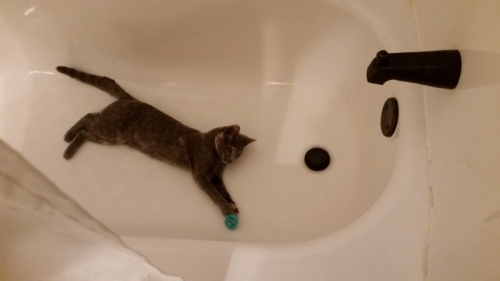 Spot playing with ball in tub 1