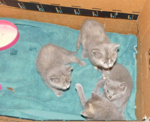 10 June 2018 All 4 kittens in house