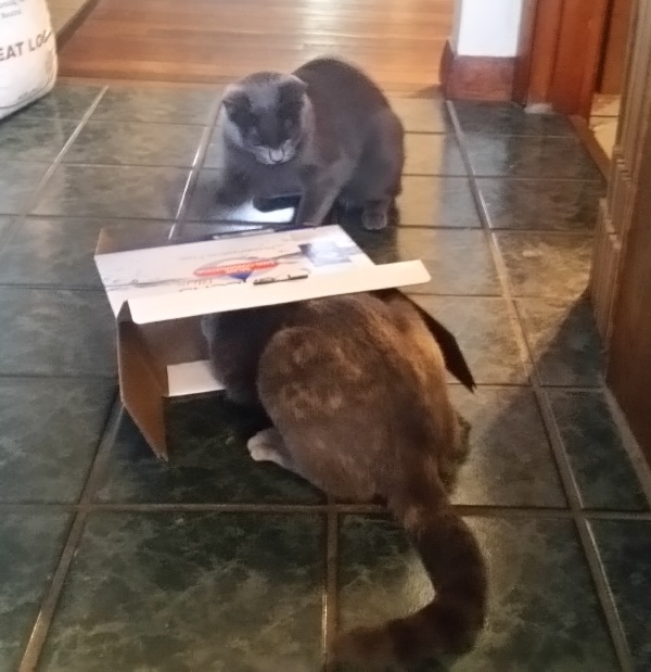 Spot and rainey with box 3