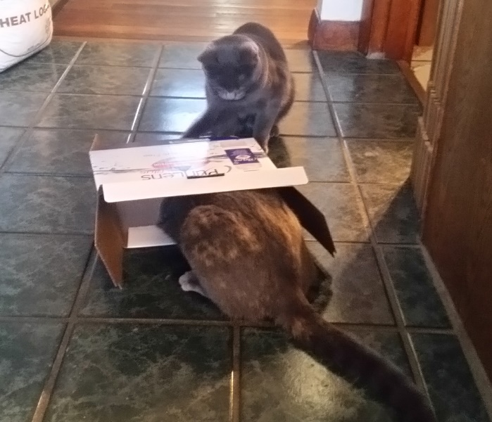 Spot and rainey with box 2