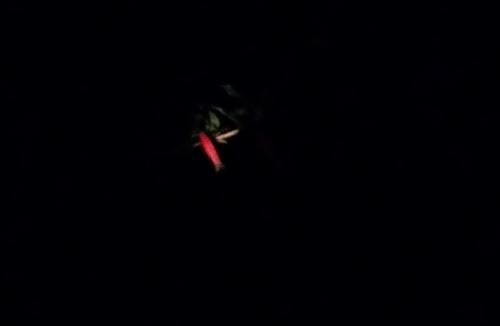 Firecracker plant close in dark