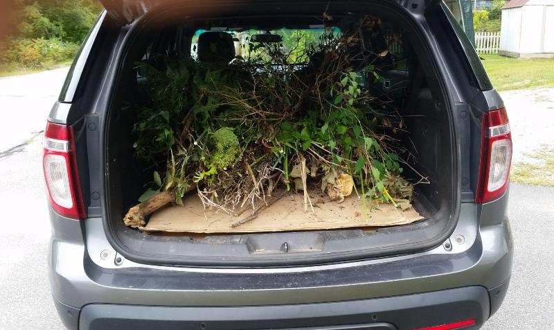 Truck full of garden clippings