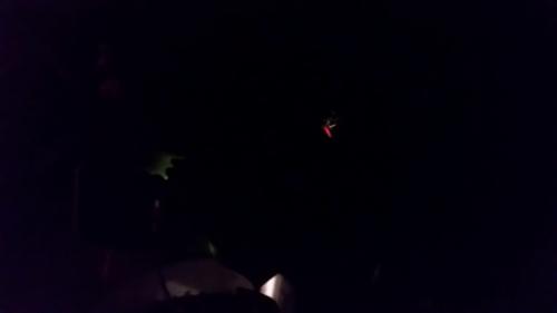 Firecracker plant far in dark