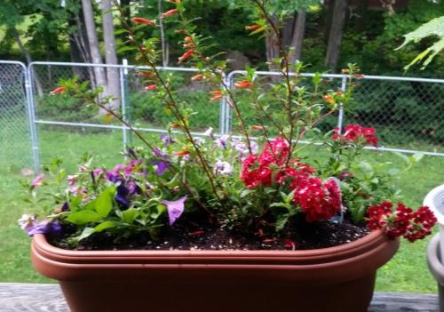 Firecracker plant planter